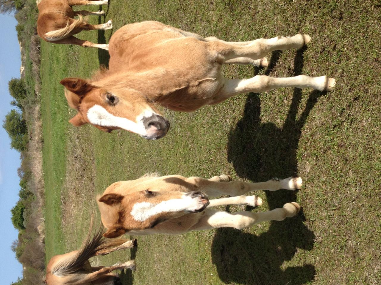 Fun and Foals